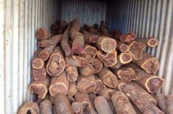 赞比亚血檀,微凹黄檀,非洲紫檀,毛榄仁,中国内木材价格行情如何?